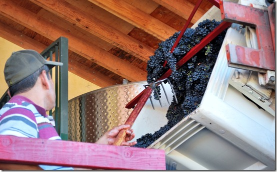 Wine Making and Grape Crushing in Napa