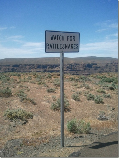 rattle-snakes